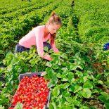 В Польше будут новые правила для сезонных работников