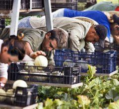 Новые правила для сезонных работников в Польше. Что изменится?